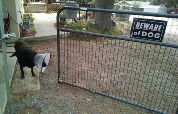 Προσοχή σε αυτούς τους σκύλους φύλακες (5)