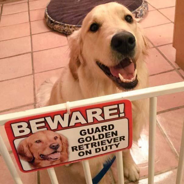 Προσοχή σε αυτούς τους σκύλους φύλακες (6)