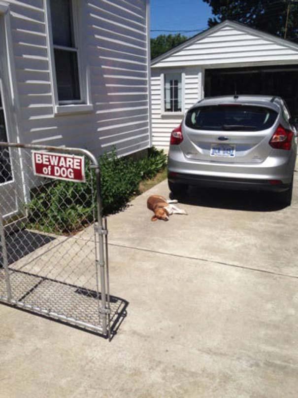 Προσοχή σε αυτούς τους σκύλους φύλακες (7)