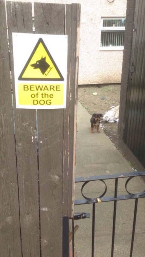 Προσοχή σε αυτούς τους σκύλους φύλακες (9)