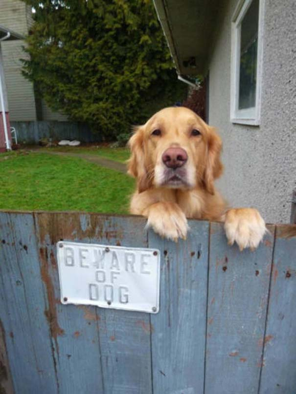 Προσοχή σε αυτούς τους σκύλους φύλακες (10)