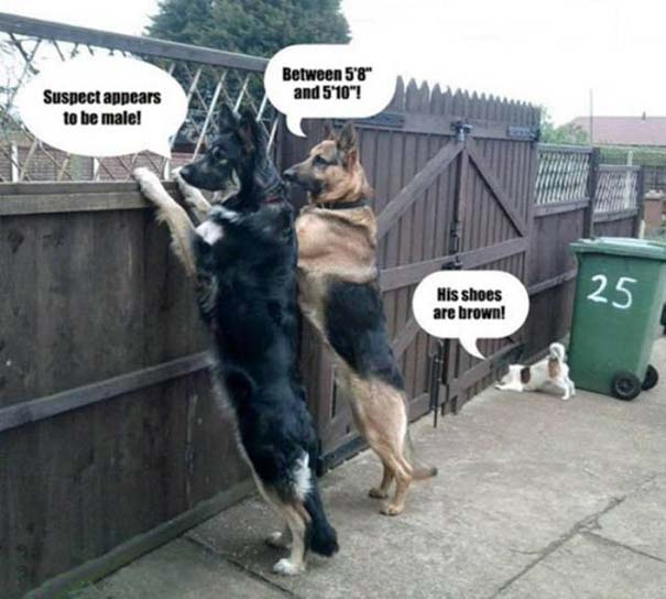 Προσοχή σε αυτούς τους σκύλους φύλακες (17)