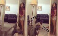 Σκύλος δεν είναι καθόλου καλός στο κρυφτό