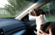 Σκύλος τρελαίνεται όταν συνειδητοποιεί πως φτάνει στο πάρκο για σκύλους