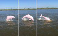 Σπάνιο ροζ δελφίνι εντοπίστηκε στην λίμνη Calcasieu της Λουιζιάνα
