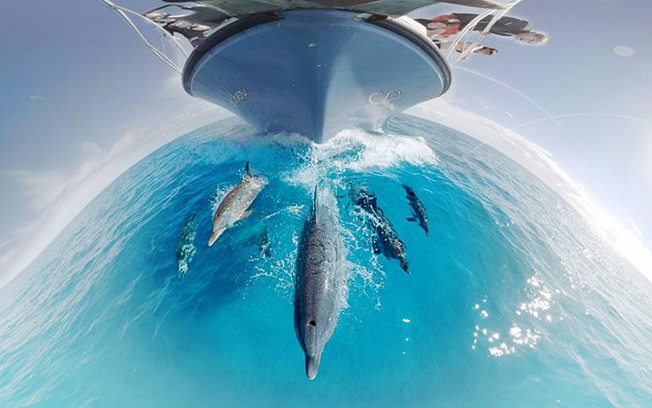 Υποβρύχιο βίντεο σε κάνει να νιώθεις πως κολυμπάς με τα δελφίνια