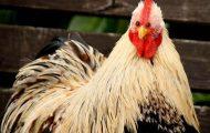 Ζώα αν είχαν τα μάτια στο μπροστινό μέρος του προσώπου (2)