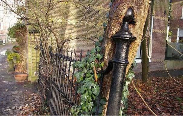 Δένδρα που αναπτύχθηκαν μέσα από αντικείμενα (2)