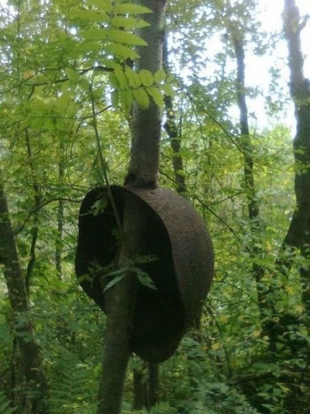 Δένδρα που αναπτύχθηκαν μέσα από αντικείμενα (4)