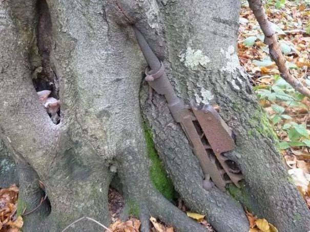Δένδρα που αναπτύχθηκαν μέσα από αντικείμενα (5)