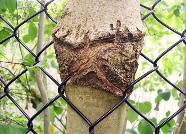 Δένδρα που αναπτύχθηκαν μέσα από αντικείμενα (8)