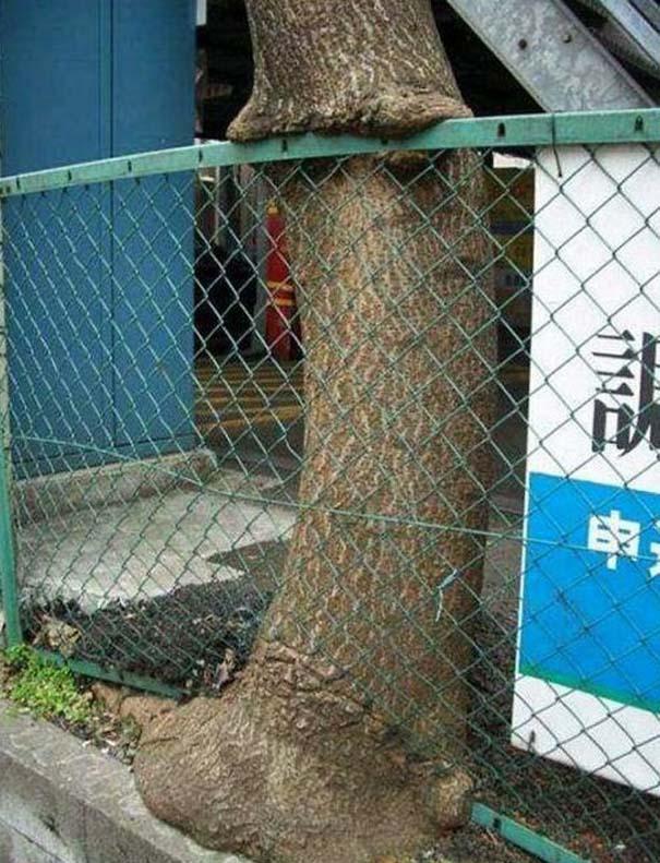 Δένδρα που αναπτύχθηκαν μέσα από αντικείμενα (9)