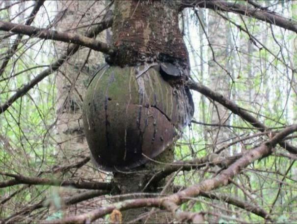 Δένδρα που αναπτύχθηκαν μέσα από αντικείμενα (11)