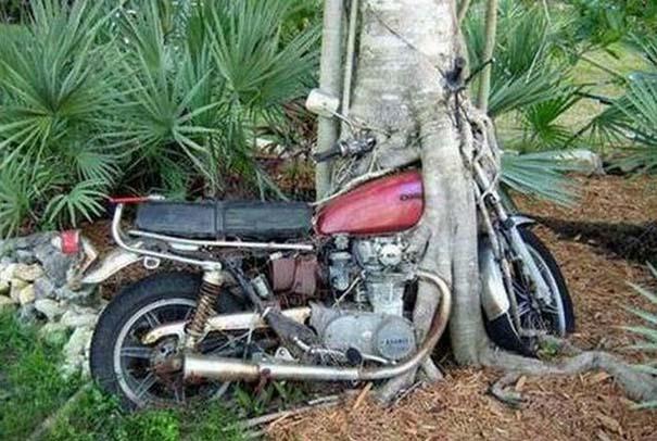 Δένδρα που αναπτύχθηκαν μέσα από αντικείμενα (12)