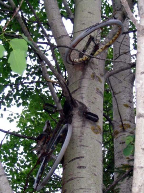 Δένδρα που αναπτύχθηκαν μέσα από αντικείμενα (13)