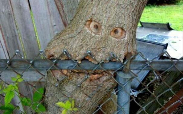 Δένδρα που αναπτύχθηκαν μέσα από αντικείμενα (14)