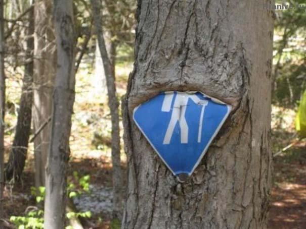 Δένδρα που αναπτύχθηκαν μέσα από αντικείμενα (16)