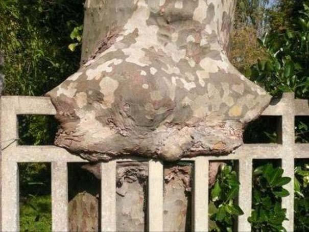 Δένδρα που αναπτύχθηκαν μέσα από αντικείμενα (19)