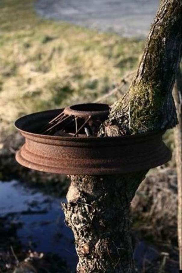 Δένδρα που αναπτύχθηκαν μέσα από αντικείμενα (21)