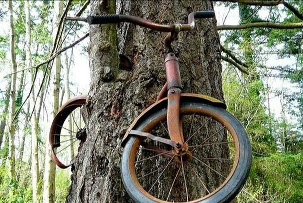 Δένδρα που αναπτύχθηκαν μέσα από αντικείμενα (22)