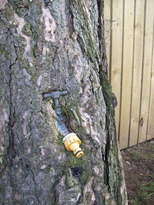 Δένδρα που αναπτύχθηκαν μέσα από αντικείμενα (23)