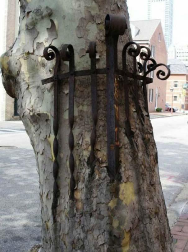 Δένδρα που αναπτύχθηκαν μέσα από αντικείμενα (24)