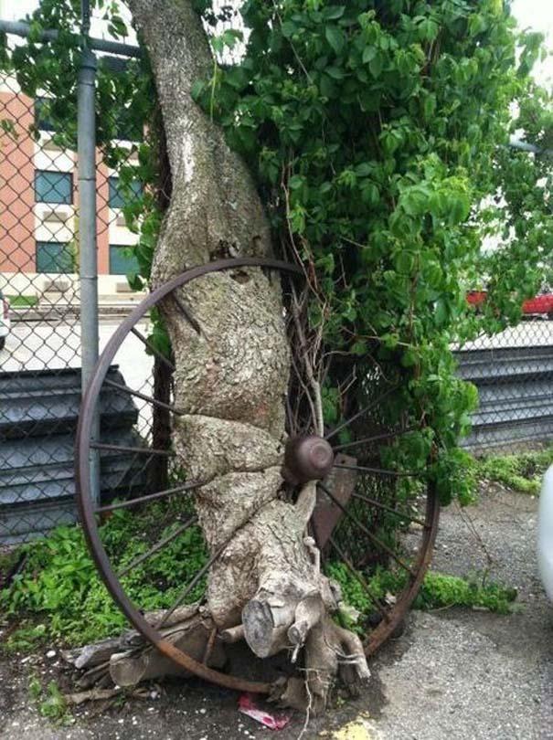 Δένδρα που αναπτύχθηκαν μέσα από αντικείμενα (25)