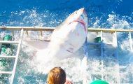 Η τρομακτική στιγμή που ένας δύτης βρίσκεται εγκλωβισμένος σε κλουβί με λευκό καρχαρία