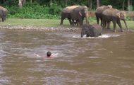 Ελέφαντας τρέχει να σώσει άνθρωπο που παρασύρεται από το ποτάμι