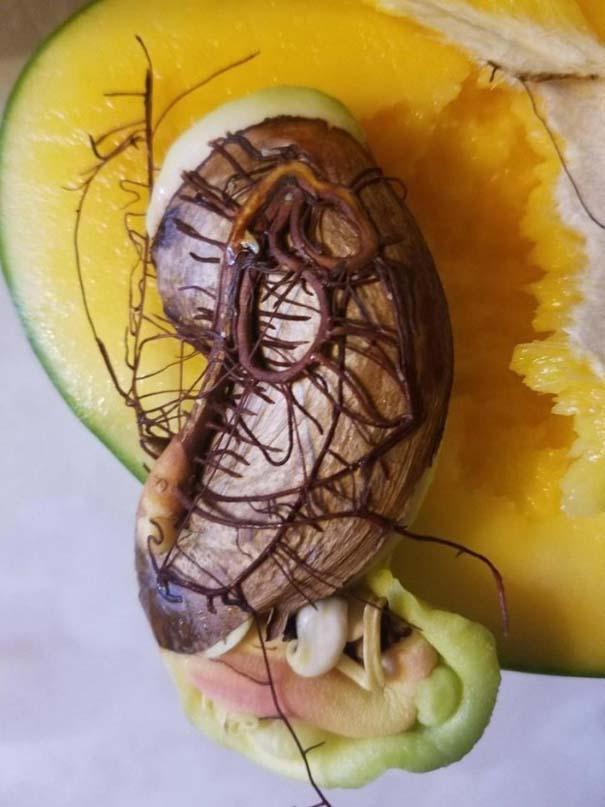 Φωτογραφίες τροφίμων που θα σας κάνουν να νιώσετε λιγάκι άβολα (1)