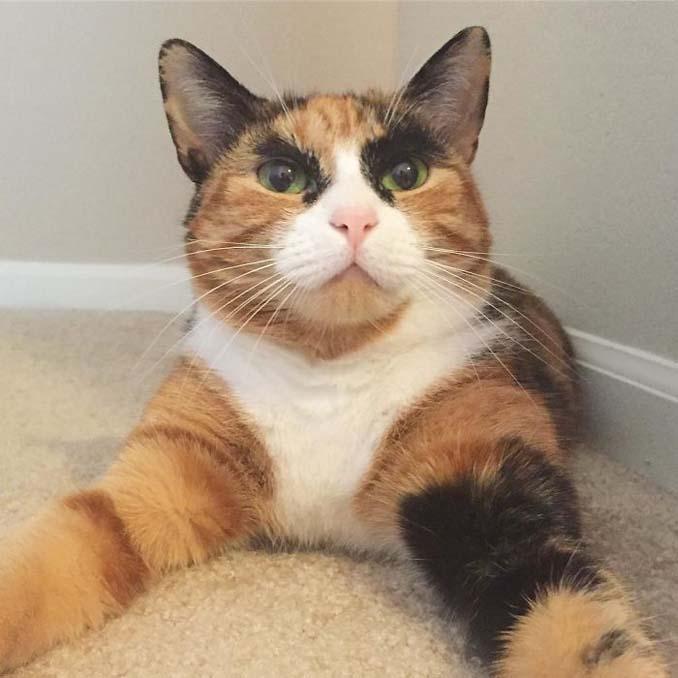 Γάτα με φρύδια και αυστηρό βλέμμα (2)