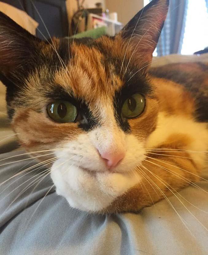 Γάτα με φρύδια και αυστηρό βλέμμα (5)