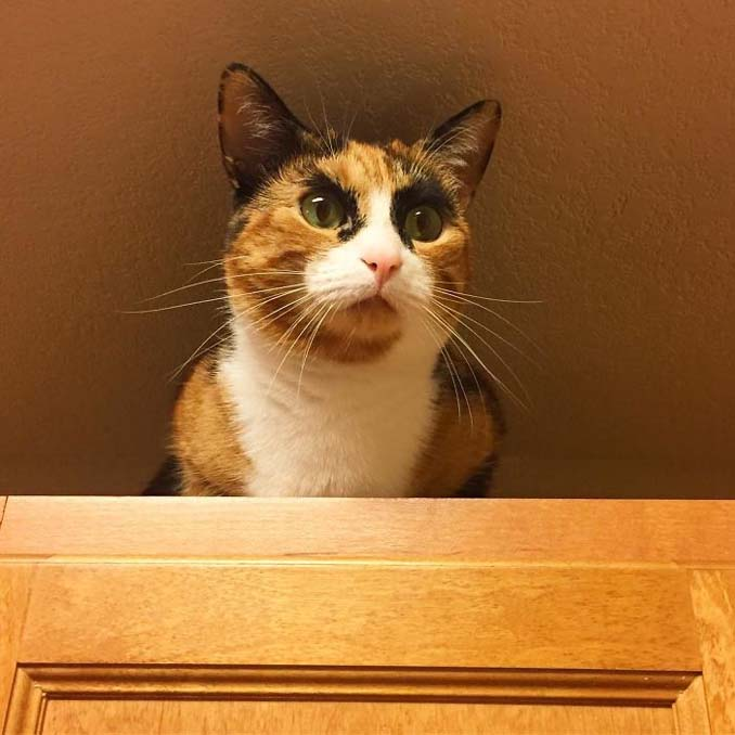Γάτα με φρύδια και αυστηρό βλέμμα (6)