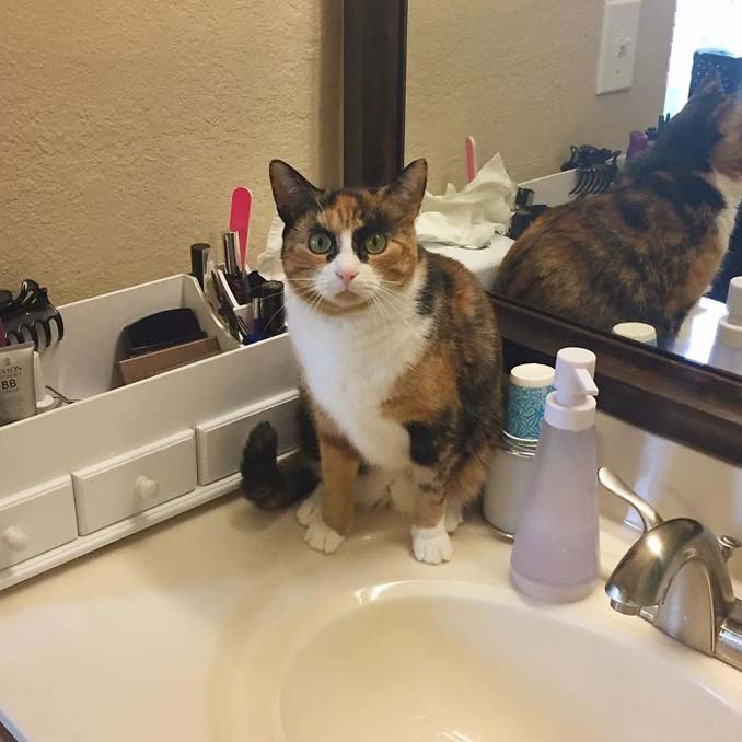 Γάτα με φρύδια και αυστηρό βλέμμα (7)