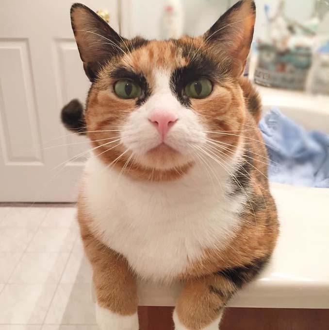 Γάτα με φρύδια και αυστηρό βλέμμα (8)