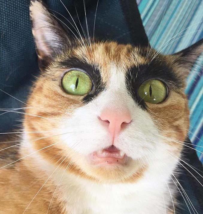 Γάτα με φρύδια και αυστηρό βλέμμα (9)