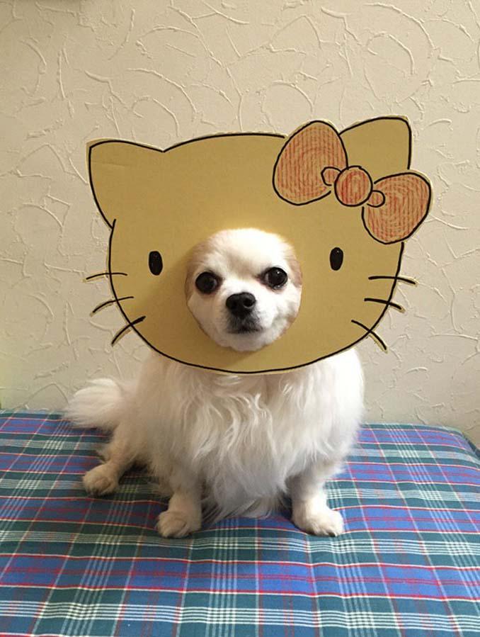Γιαπωνέζα δημιουργεί ξεκαρδιστικά σχέδια από χαρτόνι για τον σκύλο της (1)