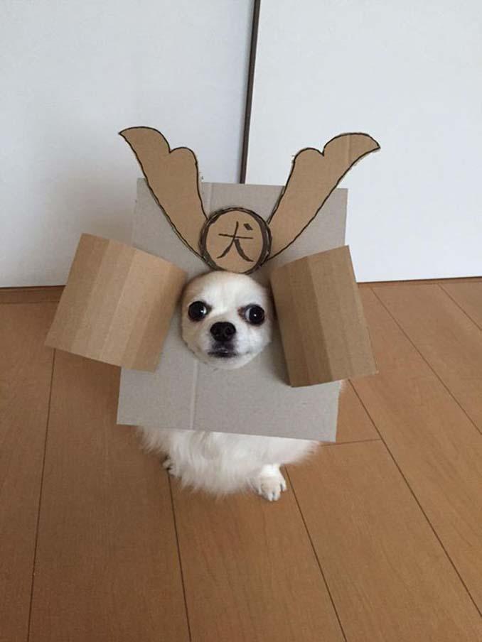 Γιαπωνέζα δημιουργεί ξεκαρδιστικά σχέδια από χαρτόνι για τον σκύλο της (2)