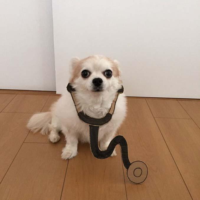 Γιαπωνέζα δημιουργεί ξεκαρδιστικά σχέδια από χαρτόνι για τον σκύλο της (3)