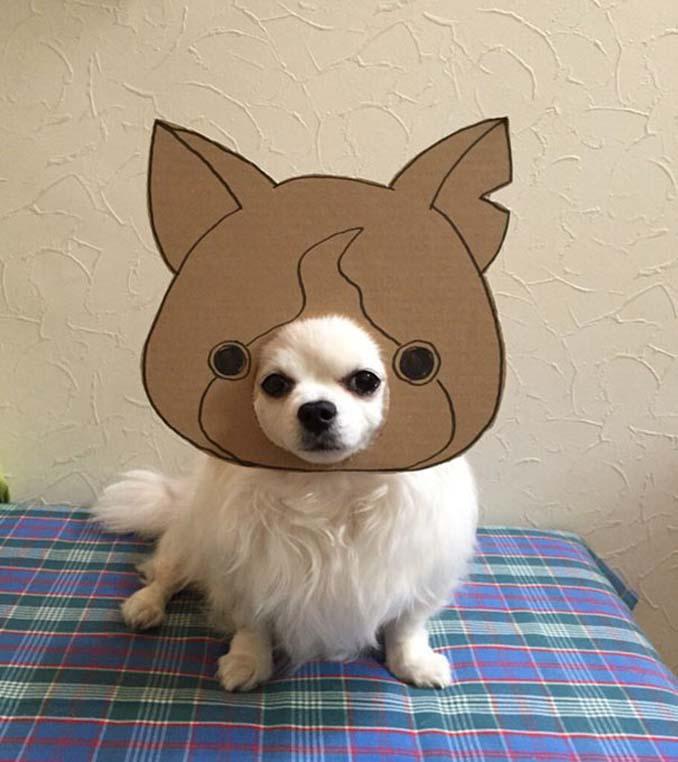 Γιαπωνέζα δημιουργεί ξεκαρδιστικά σχέδια από χαρτόνι για τον σκύλο της (4)