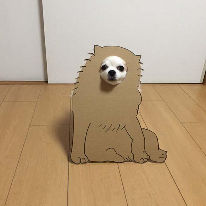 Γιαπωνέζα δημιουργεί ξεκαρδιστικά σχέδια από χαρτόνι για τον σκύλο της (6)