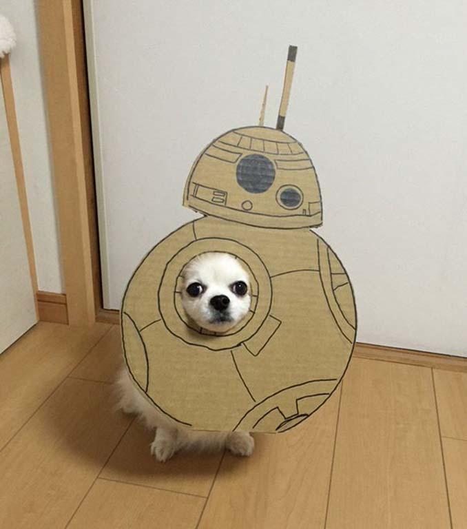 Γιαπωνέζα δημιουργεί ξεκαρδιστικά σχέδια από χαρτόνι για τον σκύλο της (7)