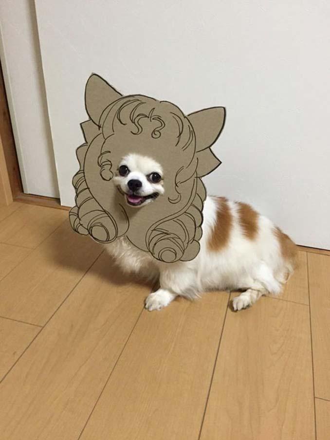 Γιαπωνέζα δημιουργεί ξεκαρδιστικά σχέδια από χαρτόνι για τον σκύλο της (8)