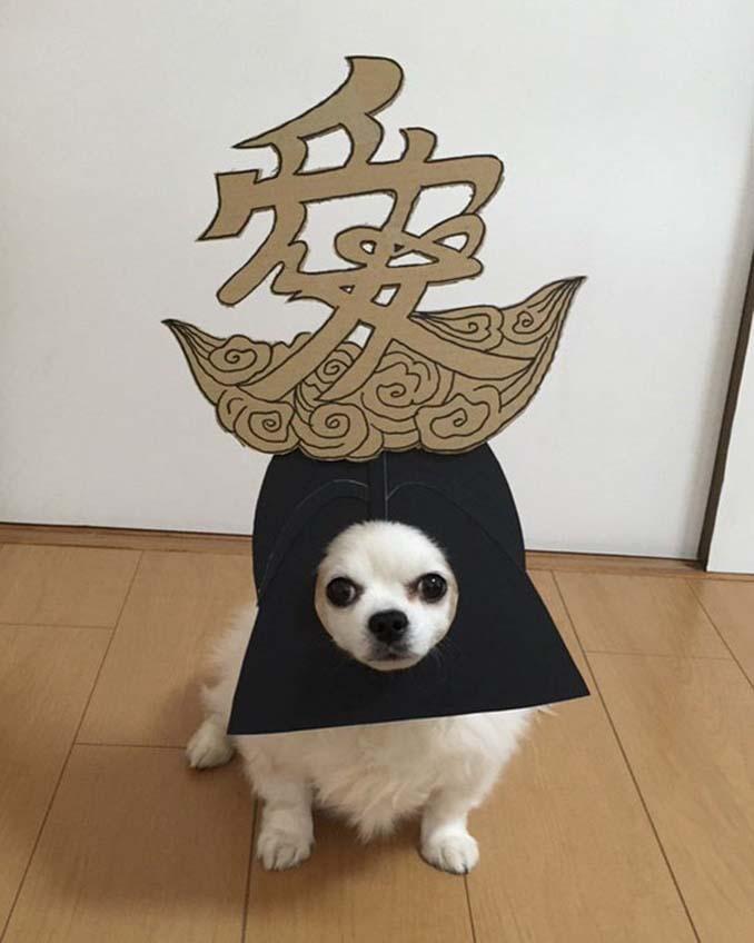 Γιαπωνέζα δημιουργεί ξεκαρδιστικά σχέδια από χαρτόνι για τον σκύλο της (9)