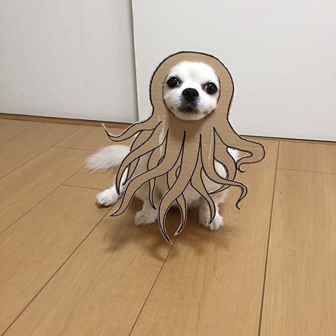 Γιαπωνέζα δημιουργεί ξεκαρδιστικά σχέδια από χαρτόνι για τον σκύλο της (11)