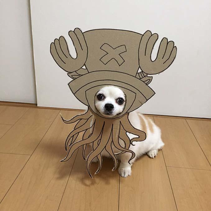 Γιαπωνέζα δημιουργεί ξεκαρδιστικά σχέδια από χαρτόνι για τον σκύλο της (12)