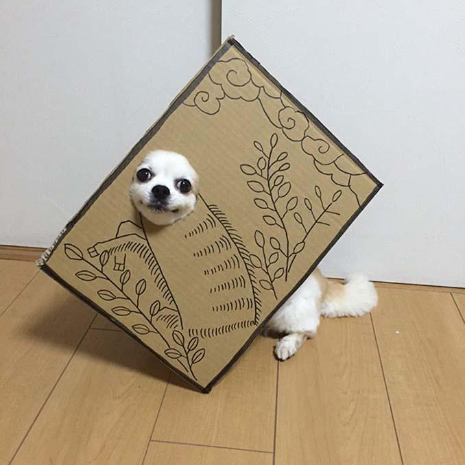 Γιαπωνέζα δημιουργεί ξεκαρδιστικά σχέδια από χαρτόνι για τον σκύλο της (13)