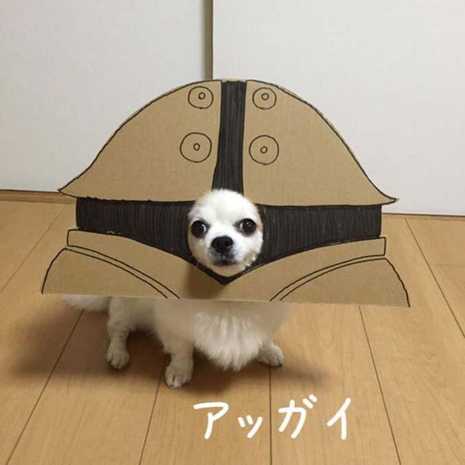 Γιαπωνέζα δημιουργεί ξεκαρδιστικά σχέδια από χαρτόνι για τον σκύλο της (14)