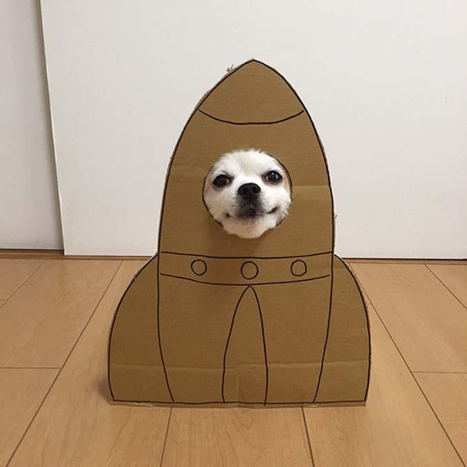 Γιαπωνέζα δημιουργεί ξεκαρδιστικά σχέδια από χαρτόνι για τον σκύλο της (15)