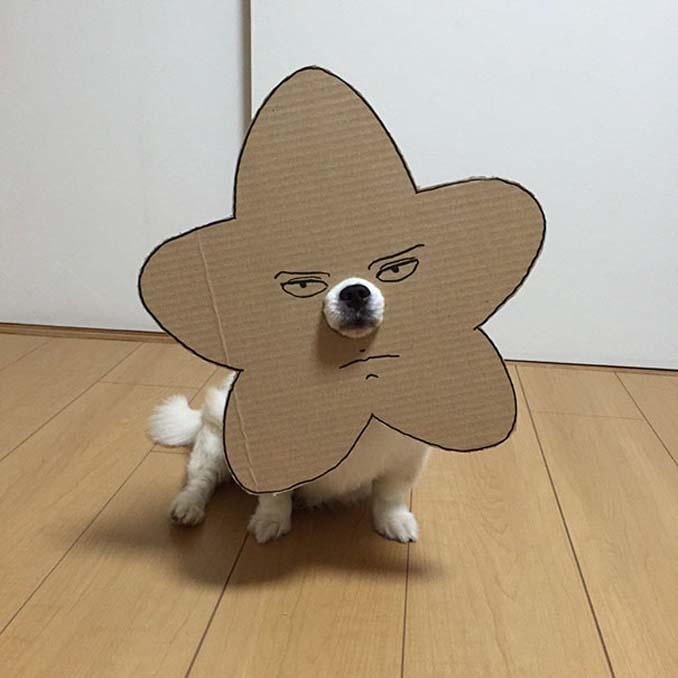 Γιαπωνέζα δημιουργεί ξεκαρδιστικά σχέδια από χαρτόνι για τον σκύλο της (16)